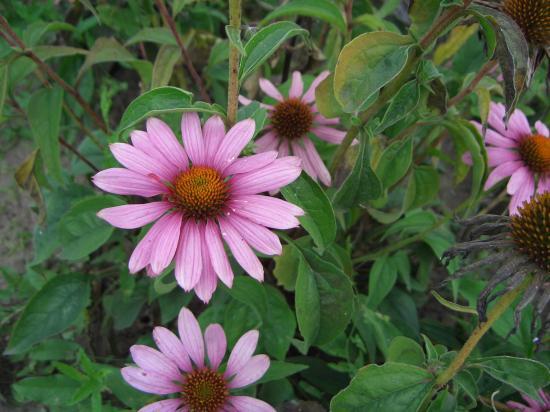лекарственных растений фото